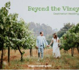 Beyond the Vineyards
